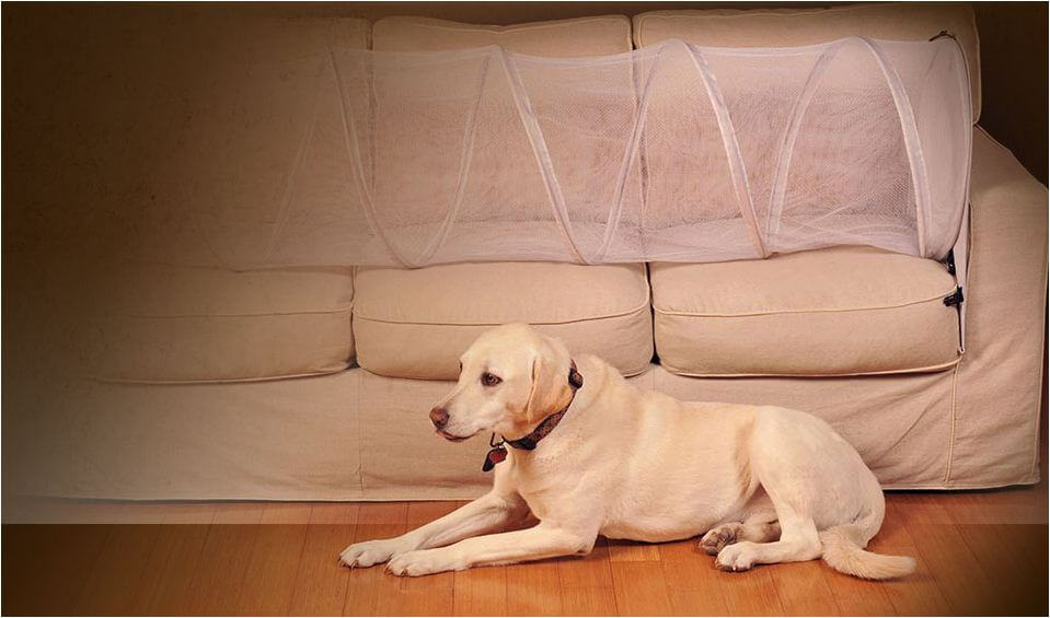 How To Keep Dog Off Couch 7 Easy Ways