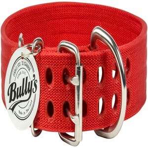 Bully Pitbull Collar