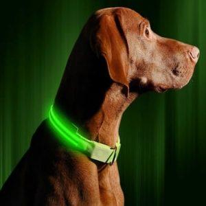 (Best Led Dog Collars) Illumiseen LED Dog Collar