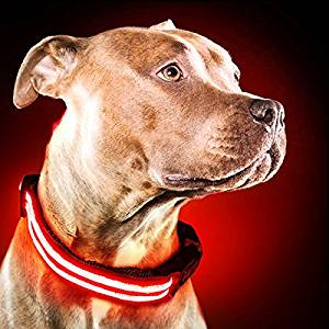 Shine for Dogs Ultimate LED Dog Collar