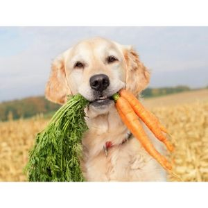 how to put weight on a dog-Switch the Food