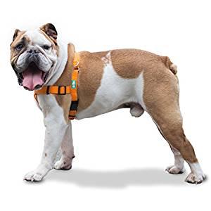 GoPets No Pull Dog Harness